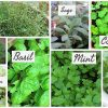 Herbs from around the world